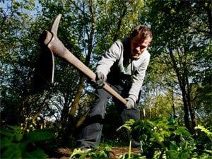 Man removing Himalayan Balsam