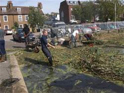 Pond clearing in Richmond