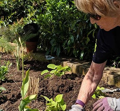 A woman gardening whilst taking part in a Green Gym