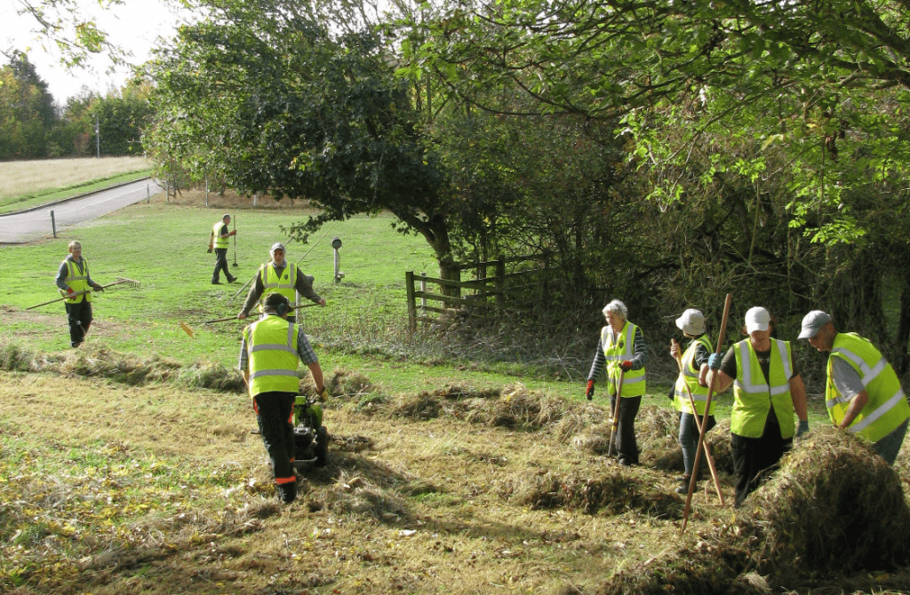 Volunteers cutting a meadow and hay raking in the sunshine