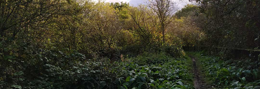 A path through a woodland in The Paddock