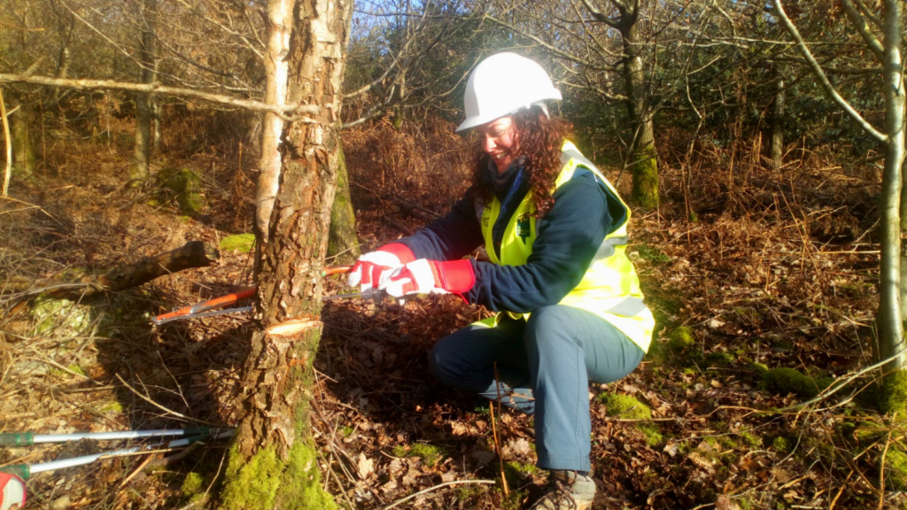 A female volunteer cutting a tree with a hand saw
