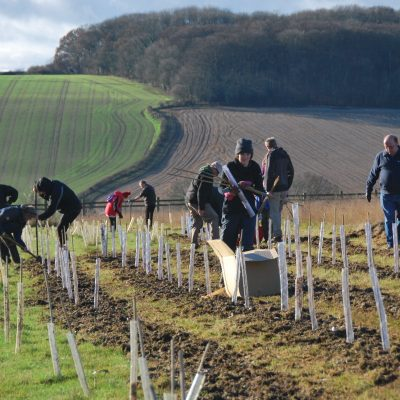 Tree planting with farmer's fields in background