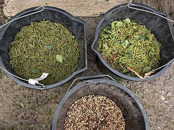 Buckets of tree seeds logo